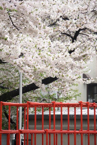 伊加賀公園-1604043