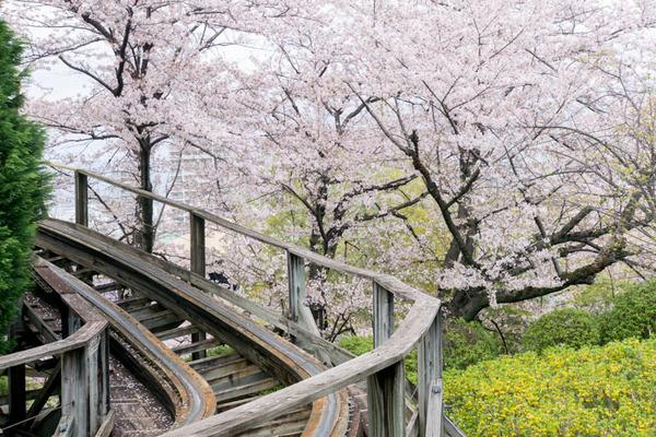 桜2-1704129