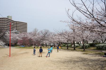 牧野公園の桜-8