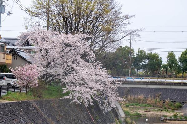 桜329-21032810