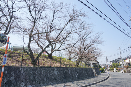 村野公園の桜-7
