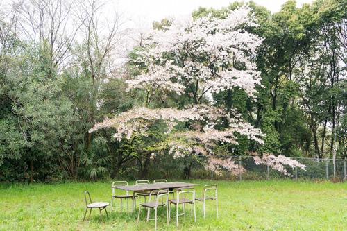 桜花祭2015-59