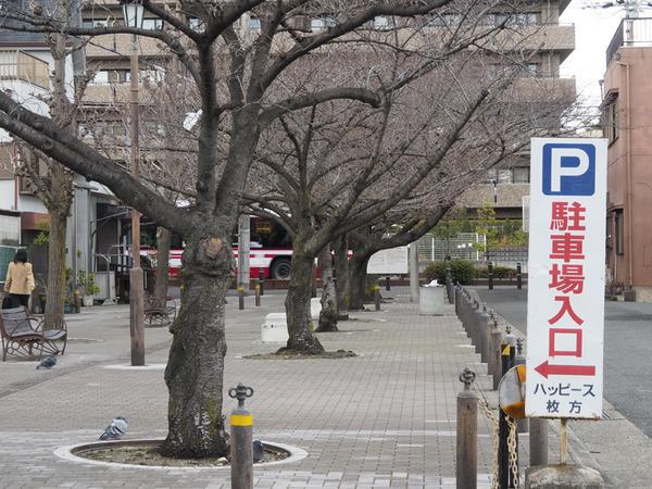 nakamiyakita1