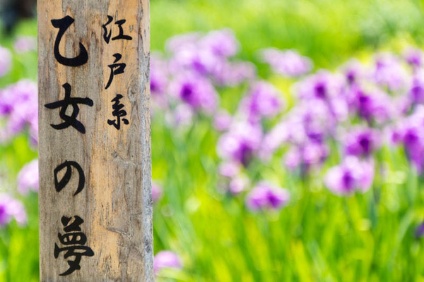 花しょうぶ園-1905256