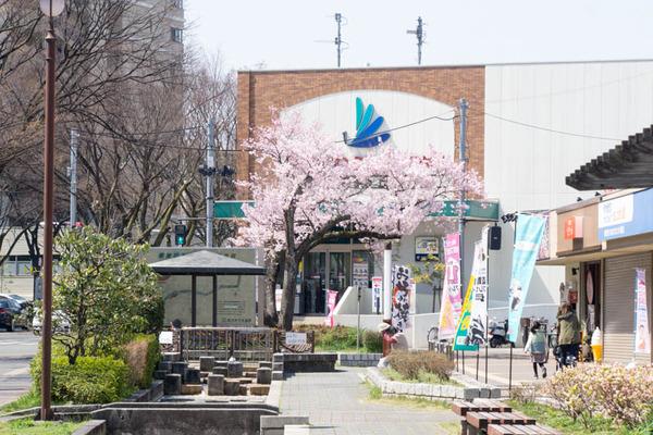 桜-1704034