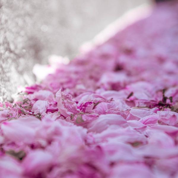 桜amatu 1-2103311-2