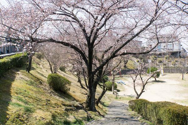 桜-1704042