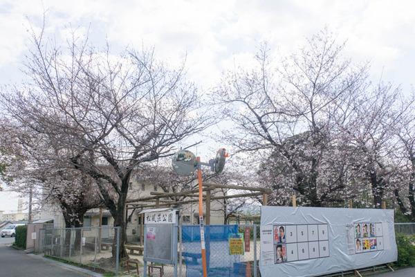 桜-1904026