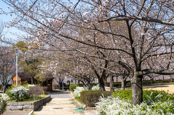松井山手-2103244