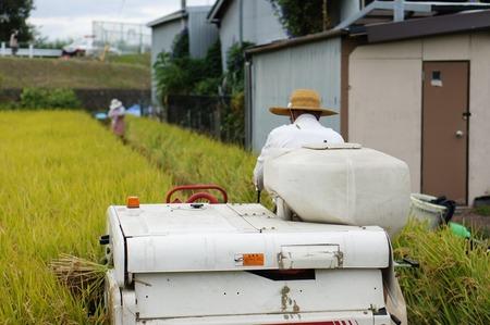 村野の米15