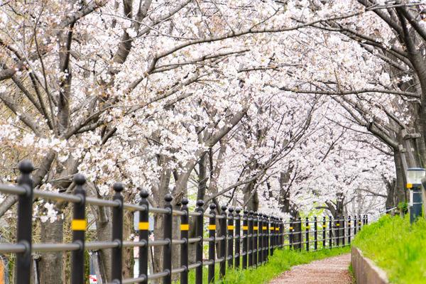 桜-2004021