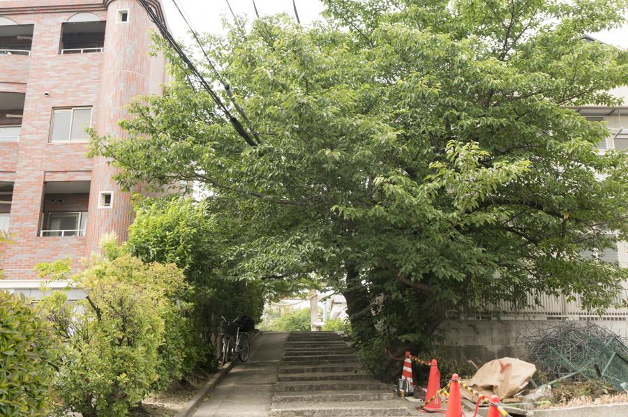 百済王神社の桜-7