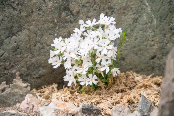 花あかるいの-1804171