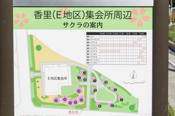 桜-1610246
