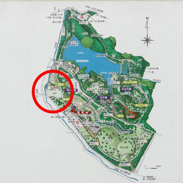 山田池公園-1808279