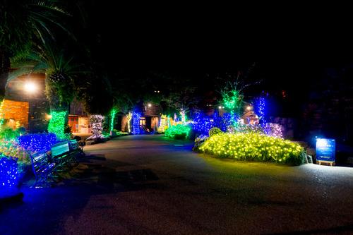 ひらかたパーク光の遊園地-151111191