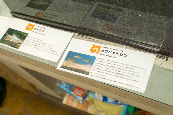 枚方高校-17121314