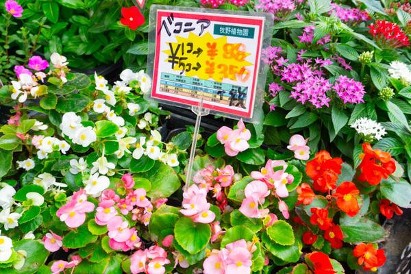 sakuranbo_通常_小-20200717-23