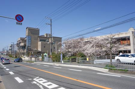 津田の桜-3