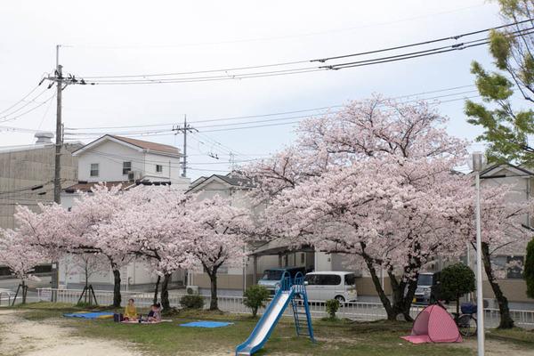 桜-1604062