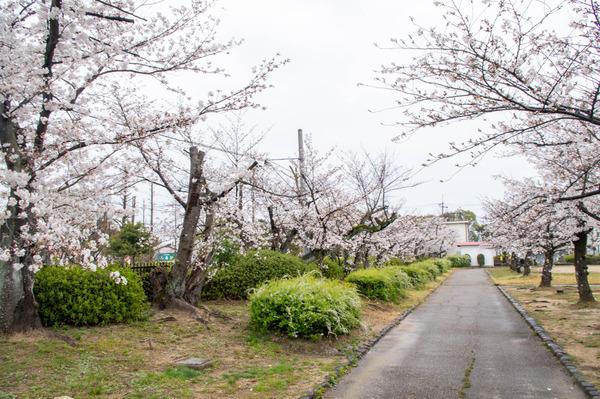 桜329-2103284