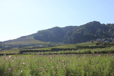 121024穂谷コスモス畑_藤山おこめつぶ03
