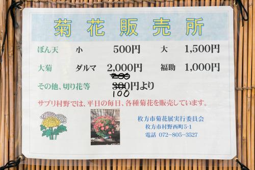 菊花展-14103145