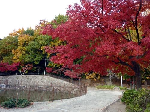 坊主池公園2