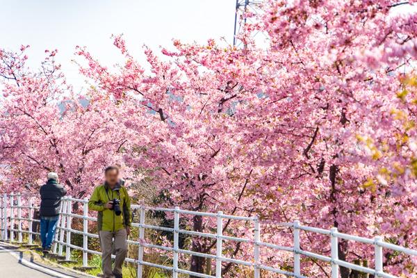 桜-2003024