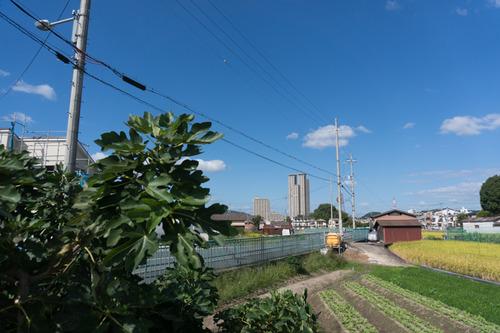 船橋本町2-111