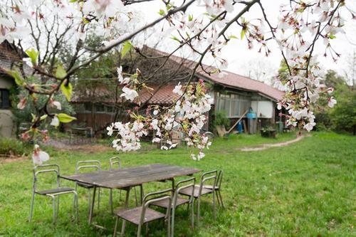 桜花祭2015-61