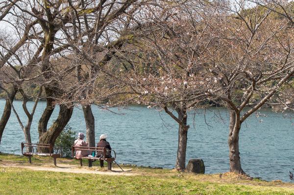 桜323-2103231-2