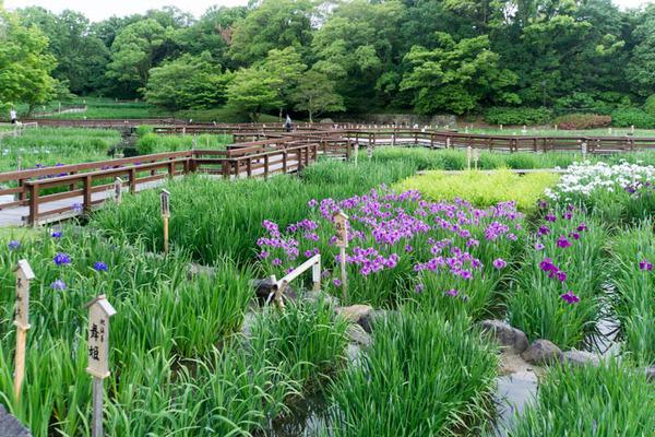 山田池公園-17052527