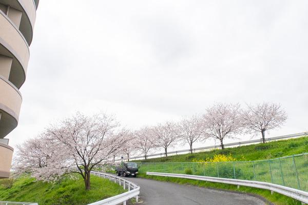 桜-2003313