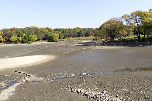 池の水ぜんぶ抜く5-1711274
