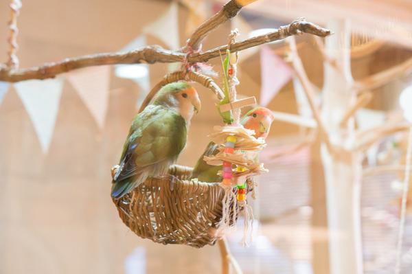 1木と小鳥カフェ-183