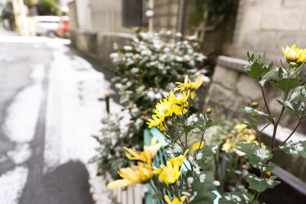 20170115雪-10