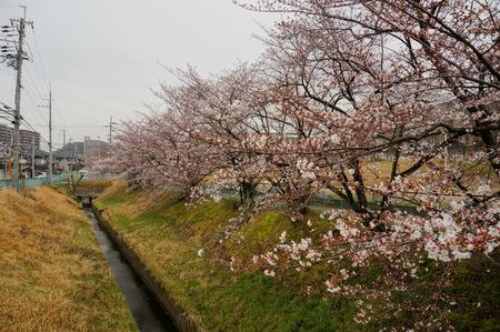 北谷川緑地130328-03