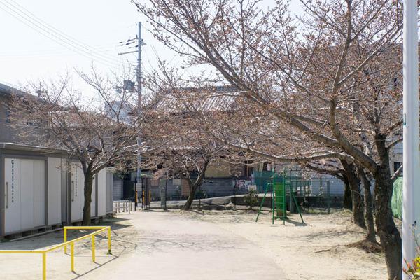 桜-1704033