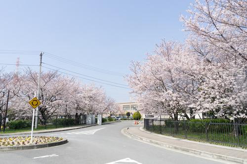 桜-15033101