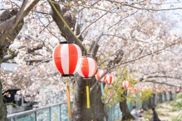 明るめ桜-1904055