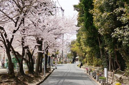 茄子作の桜130401_06