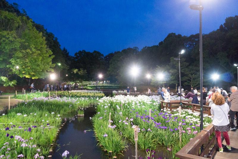 花菖蒲園-15060608