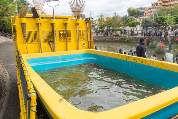 池の水-19102011