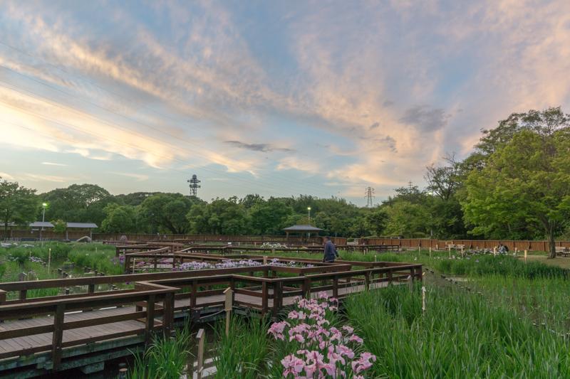 花菖蒲園-15052512