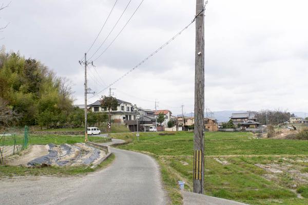 長尾杉線-1903145