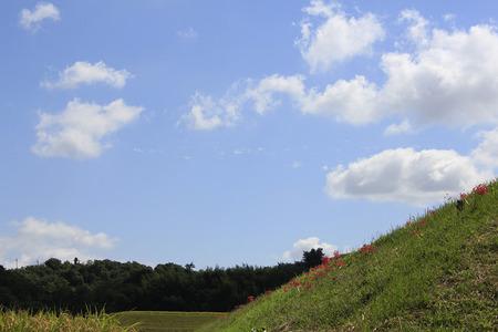 121002穂谷コスモス畑03
