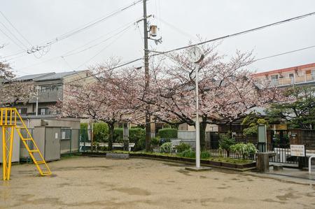 伊加賀公園-2