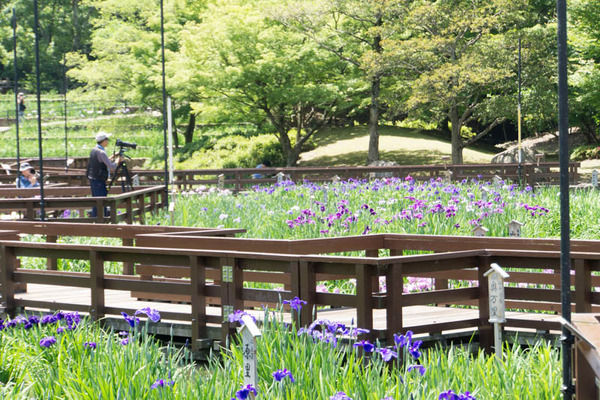 山田池公園-18052510