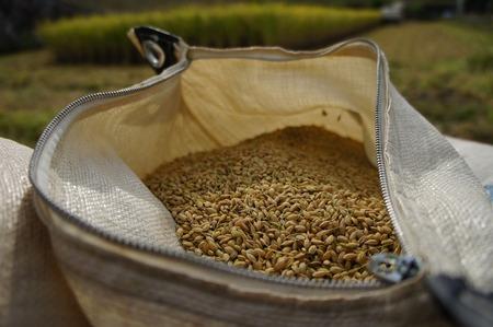村野の米16